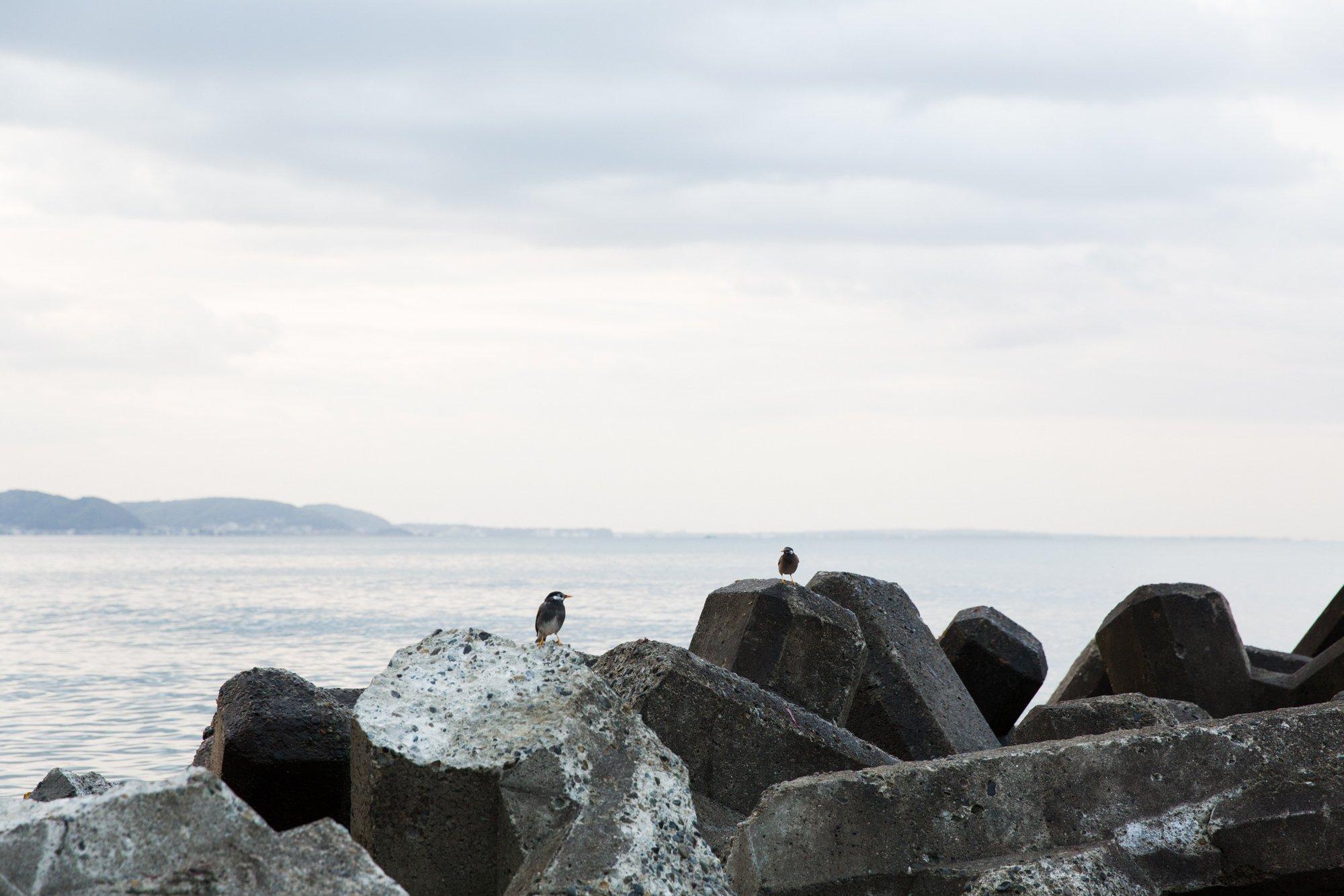 腰越の海と鳥