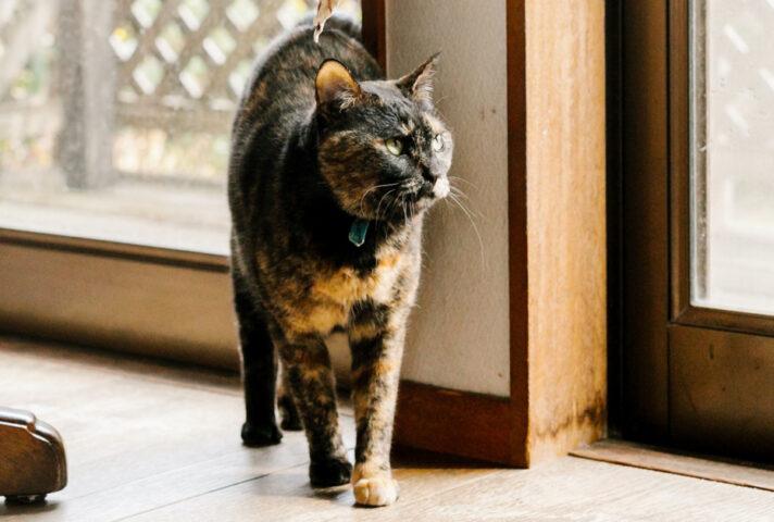 猫宿の猫のメイちゃん